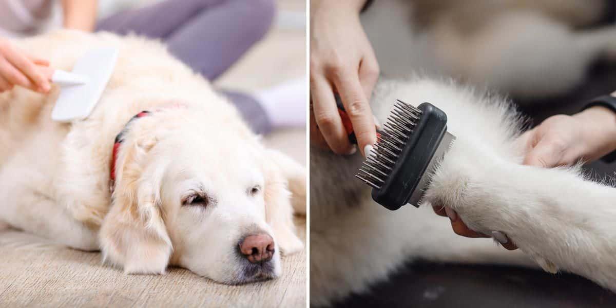 Fellpflege beim Hund Bürsten Furminator