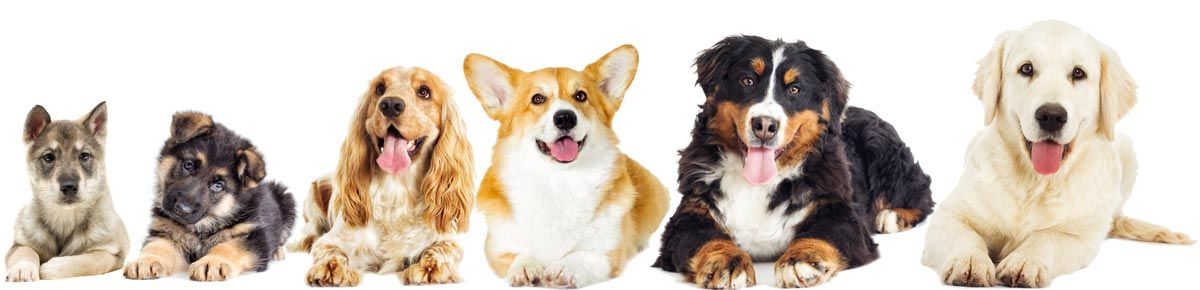 Fellpflege beim Hund - Hunderassen und Felltypen